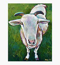 Serta the Sheep who looks like a Goat Photographic Print