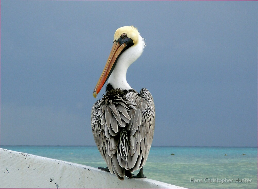 Pelican by Hans Christopher Hunter