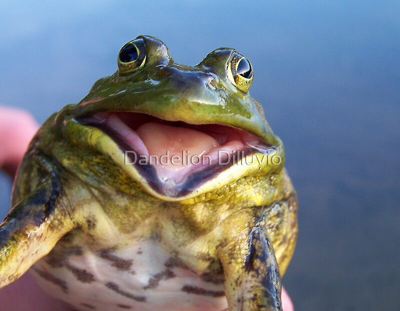 Quot Screaming Bullfrog Quot By Dandelion Dilluvio Redbubble