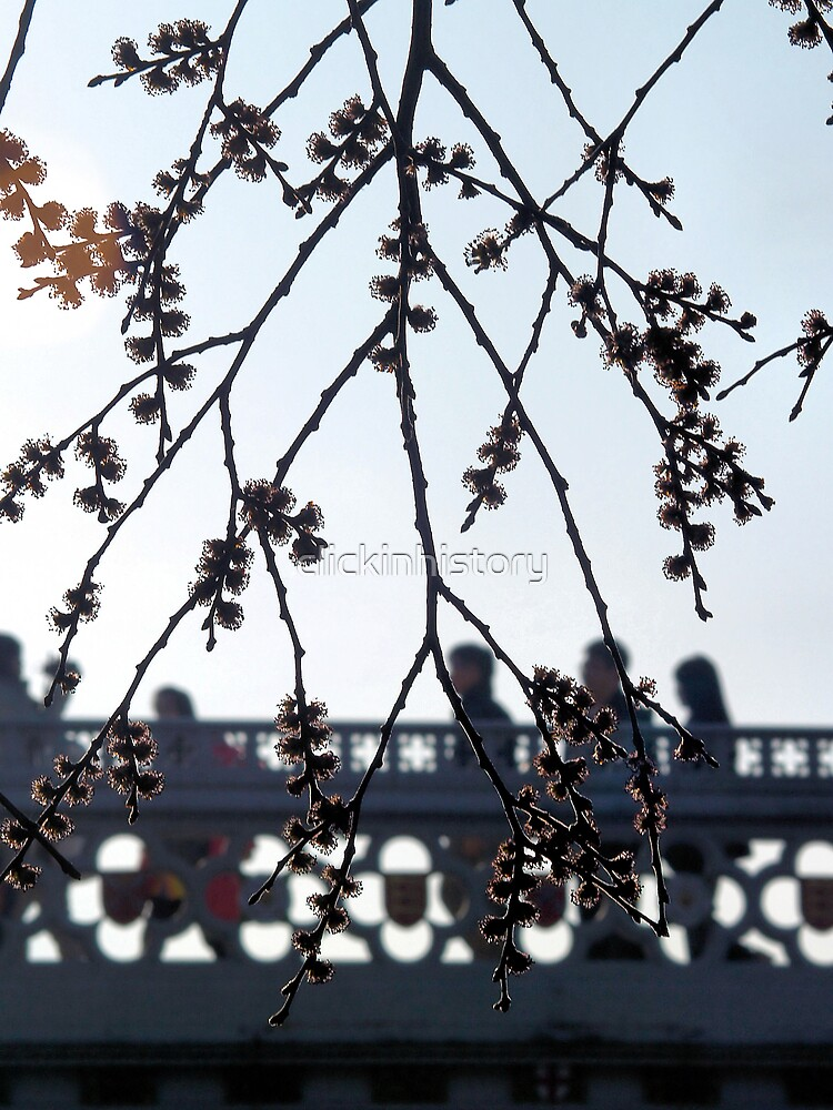 Spring blossom in the rush hour by clickinhistory