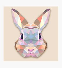 Rabbit Hare Animals Gift Photographic Print