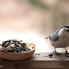 I'm Not Hungry... by Christianne Gerstner