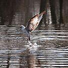 Gone Fishin' by Christianne Gerstner