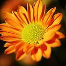 HOPE by Terri~Lynn Bealle