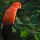 Feathered Friend by David Mapletoft