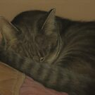 Soft Kitty by Pam Humbargar