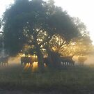 Cattle in early mist by Debbie  Blennerhassett