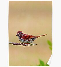 The Little Red Bird Poster