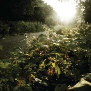 Nettles by Dusk by wildriver