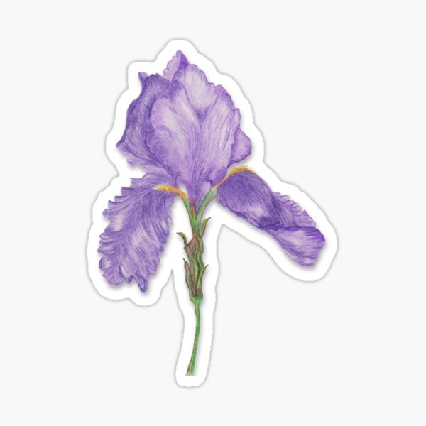 Old Fashioned Purple Bearded Iris Sticker