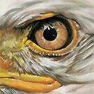 Eye-Catching Bald Eagle by BarbBarcikKeith