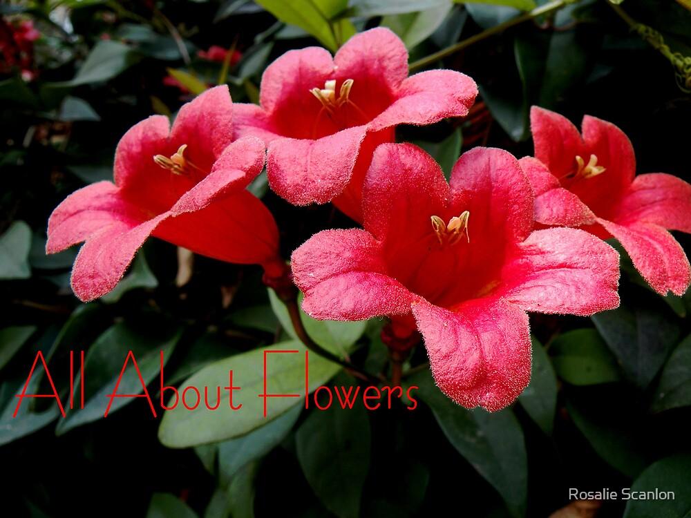 Bell Flowers by Rosalie Scanlon