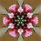 Pink Floral Mandala by DesJardins