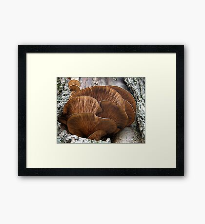 Unidentified Tree Fungi Framed Print