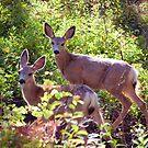 Pair of Yearlings by steini