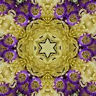 Six Pointed Star Purple and Off White Flower Mandala by DesJardins