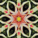 Lilly Star Mandala by DesJardins