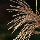 Grass Seeds by Martha Johnson