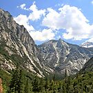 Kings Canyon National Park by Rosalee Lustig