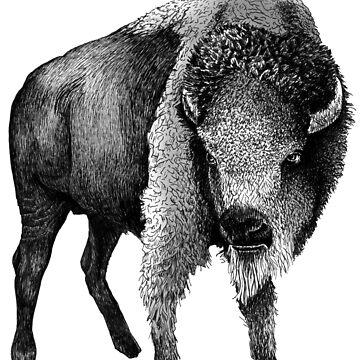 American Buffalo by AirDrawn