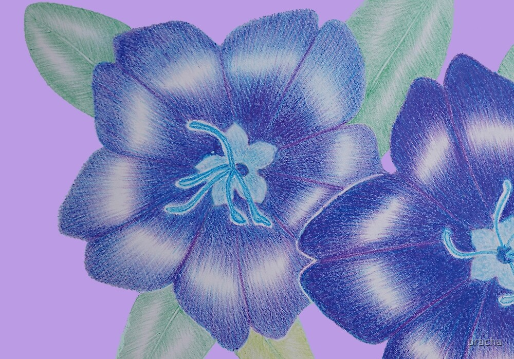 Blue Flower by pracha