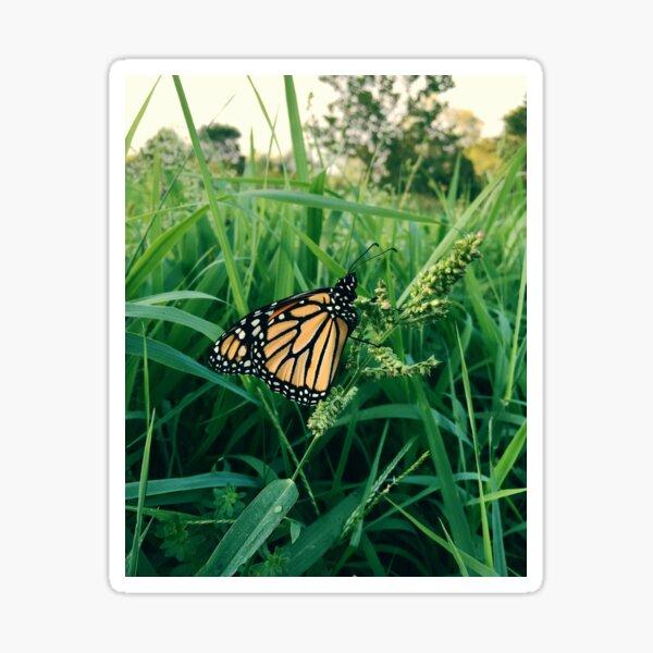 Garden Butterfly Sticker