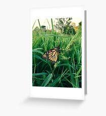 Garden Butterfly Greeting Card