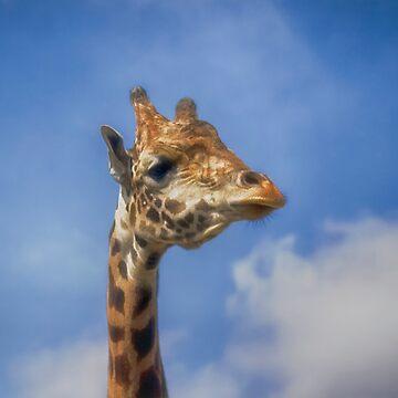 Giraffe by kdxweaver