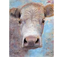White Cow Photographic Print