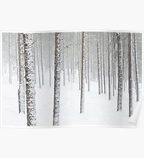 Winter Forest Finland  Poster