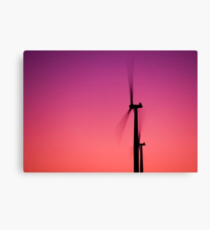 Pink fans Canvas Print