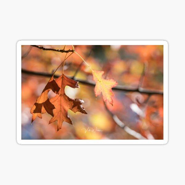 Autumn leaves from Honour Avenue, Mount Macedon, Victoria, Australia. Sticker