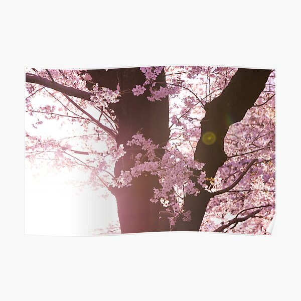 Japanese Cherry Blossom Wall Art Redbubble