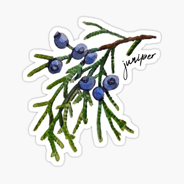 Watercolor Juniper Sticker