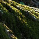 Moss - natural light by solareclips~Julie  Alexander