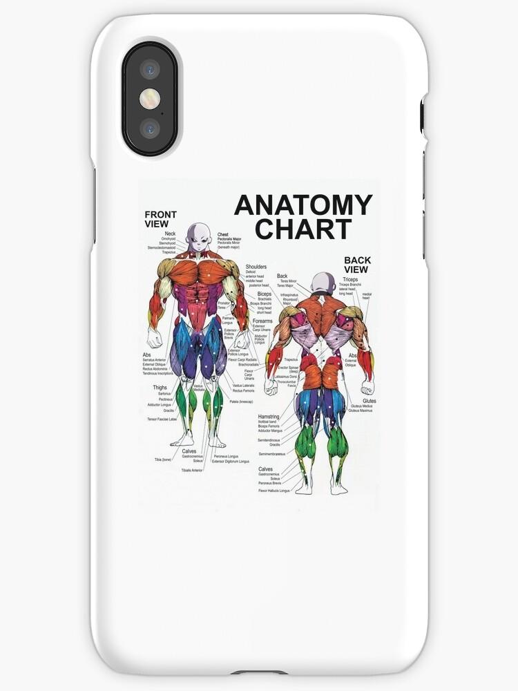 Vinilos y fundas para iPhone «Tabla de anatomía - Diagrama muscular ...