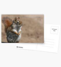 Proud squirrel Postcards