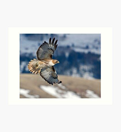 Red-Tailed Hawk Banking Away Art Print
