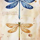 Nature art insect science by Watercolor Naturalist