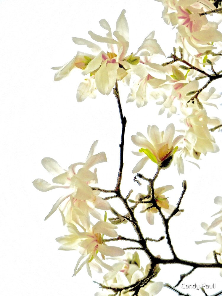 Star Magnolia Trellis 9165 by Candy Paull