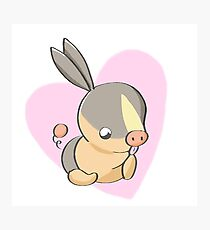 tepig grooms Photographic Print