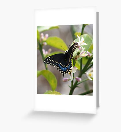 Black Swallowtail 2 Greeting Card