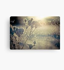 Winter branch covered with snow Canvas Print