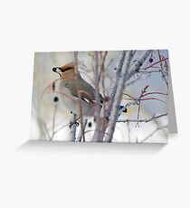 Waxwing and Late Season Berries Greeting Card
