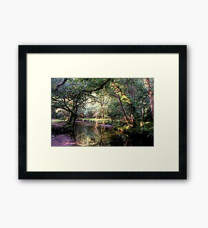 Dartmoor Stream Framed Print