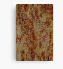 Scribbly Gum 5 Canvas Print