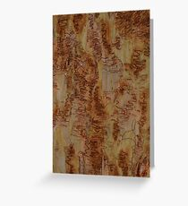 Scribbly Gum 5 Greeting Card