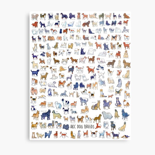 Every AKC Dog Breed Metal Print