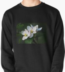 Blossom Time Pullover