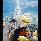 Fish in the Sea by Lisa Hildwine